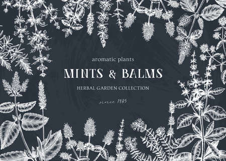 Mints on chalkboard. Hand sketched mint plants banner. Vintage herbs, leaves, flowers hand drawings background. Perfect for recipe, menu, label, packaging. Herbal tea template. Botanical illustration. Stock Illustratie