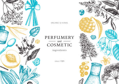 Vector background with fragrant fruits sketched perfumery and cosmetics ingredients illustration. Aromatic and medicinal plants banner design. Botanical template in colors