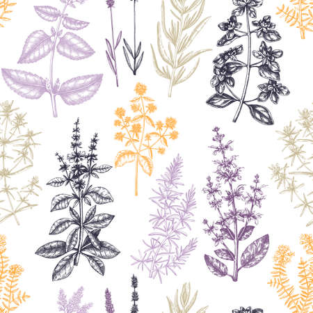 Traditional Provence herbs pattern. Ilustracja