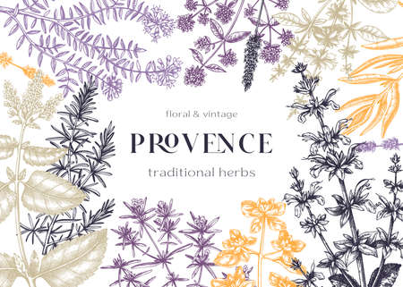 Traditional Provence herbs frame design.