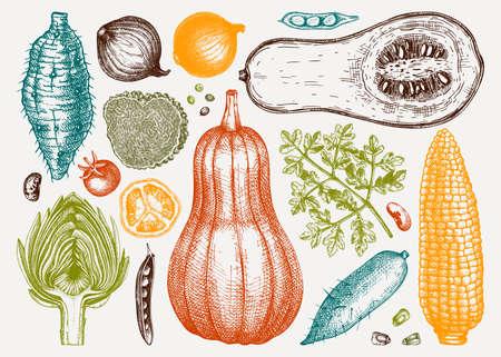 Hand-sketched vegetables collection in colors. Seasonal food ingredients - herbs, vegetables, mushrooms illustration. Healthy food vector illustrations set in vintage style. Stock Illustratie