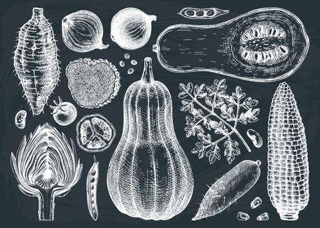 Seasonal vegetables vector drawings collection. Healthy food ingredients on chalkboard - vegetables, herbs, mushrooms illustration. Vintage kitchen set. Hand-sketched vegetables.