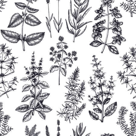 Traditional Provence herbs seamless pattern. Vector savory, marjoram, rosemary, thyme, oregano, lavender backdrop. Hand-sketched kitchen herbs, aromatic and medicinal plants background Ilustracja