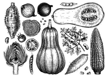 Vector vegetables, mushrooms and herbs collection. Hand-sketched healthy food ingredients drawings. Perfect for menu, recipes, web banner, ads, brands. Vintage style food illustrations Ilustracja