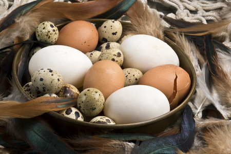 cock duck: Fresh duck, hen and quail eggs in a copper bowl surrounded by hen and cock feathers