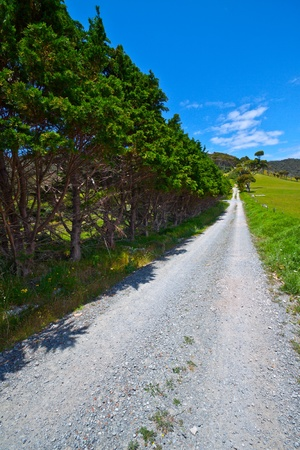 Rocky hiking trail, surrounded by green trees. Summer with bright blue sky. Whangarei Heads, New Zealand photo