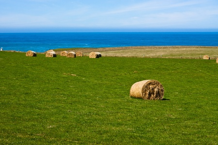 Hay Bales on coast. Slope Point, Catlins, South Island, New Zealand. photo