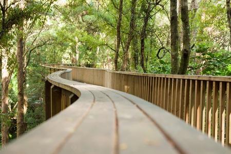 Forest pedestrian bridge. Whangarei, New Zealand. photo