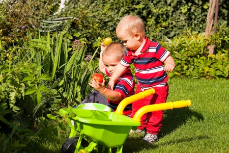 Little brothers enjoy garden on sunny summer day. photo