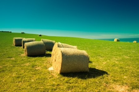 Colorful landscape with hay bales in New Zealand. photo