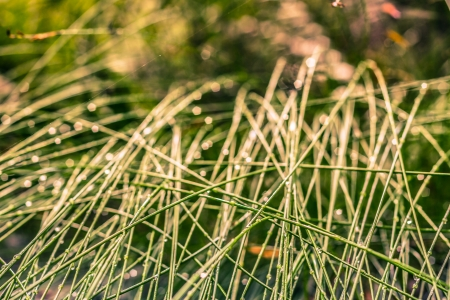 Detail of grass and dew, green natural background. photo
