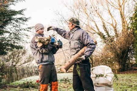 Professional gardeners pruning trees. photo