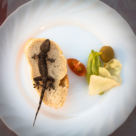 Lizard and bread with vegetable on plate photo