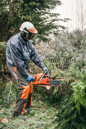 forestry industry: Professional gardener cutting tree with chainsaw.