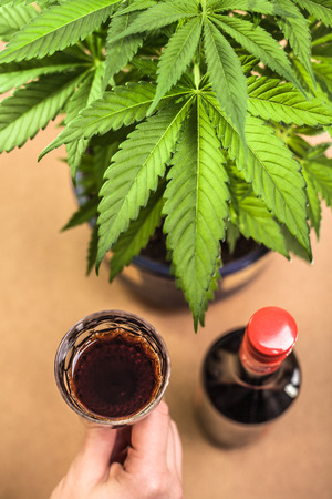 cannabinoid: Cannabis plant and hand holding glass of alcohol. Stock Photo
