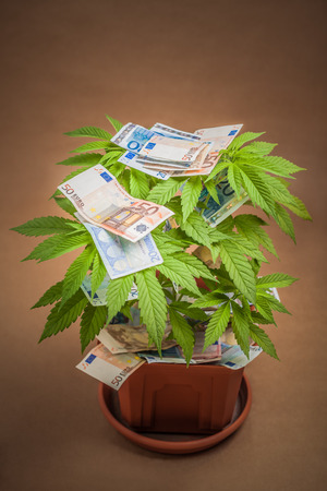 eur: Marijuana business concept. Cannabis plant in flowerpot with Euro banknotes.