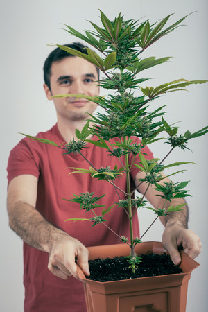 Portrait of happy man holding Cannabis plant in flowerpot. photo