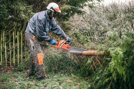 Jardinero profesional cortando árboles con motosierra. Foto de archivo