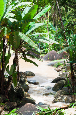 langkawi island: Tropical rainforest and river in Langkawi island, Malaysia.