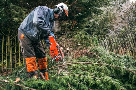 Jardinero profesional cortando árboles con motosierra.
