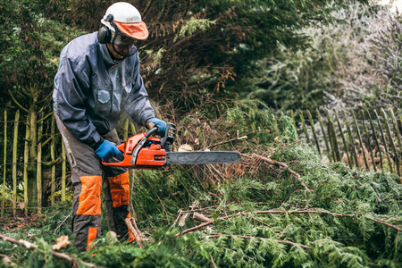 timber cutting: Professional gardener cutting tree with chainsaw.