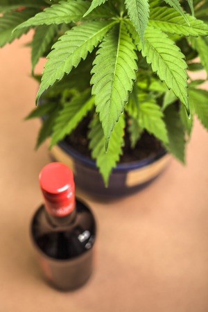 cannabinoid: Cannabis plant and bottle of alcohol. Stock Photo