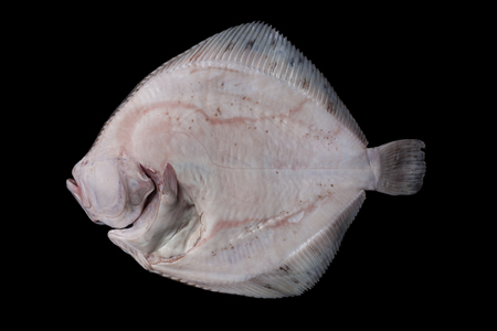 Whole fresh raw disemboweled flatfish bottom side, caught in the Alboran Sea in Spain, isolated on black background. Stock Photo