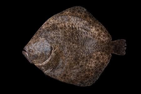 demersal: Whole fresh raw flatfish caught in the Alboran Sea in Spain, isolated on black background. Stock Photo