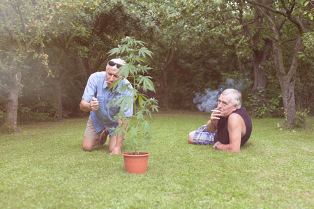 drug user: Two seniors smoking marijuana joint and relaxing next to the Cannabis plant outdoors in the garden.
