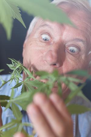Shocked senior man looking at Cannabis plant.
