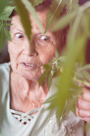 mujeres ancianas: Conmocionado mujer mayor que mira la planta de cannabis. Foto de archivo