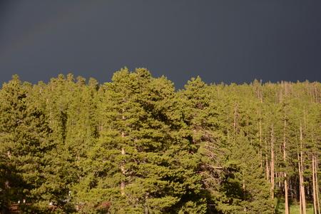 black sky over sunlit forest