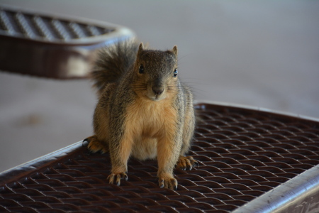 Squirrel on bench 1