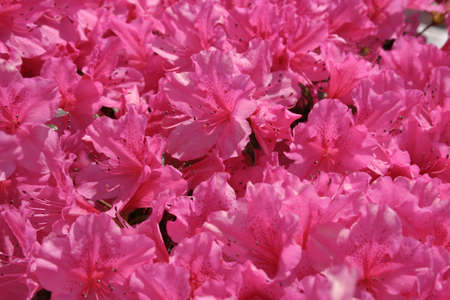 bright pink flowers
