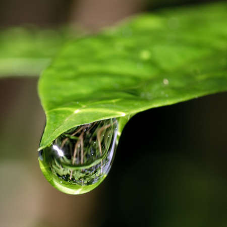 Macro photo of one bright green leaf with big reflective raindrop on the top