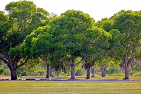 A row of typical trees in the Everglades National Park in Florida, on a small patch of well-kept land in the middle of the untamed wilderness.