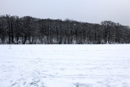treeline: View towards the shore from the frozen lake Schlachtensee in Berlin, Germany.