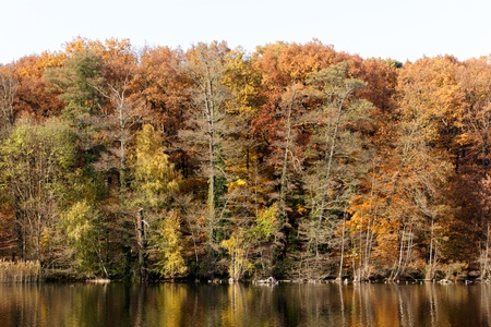 The shore wooded shore of lake Schlachtensee in Berlin, Germany with beautiful Fall foliage in landscape format.