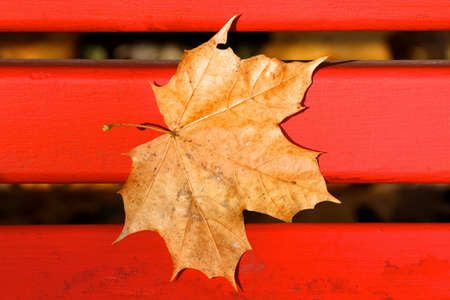 Pale brown fallen maple leaf stuck to a bright red park bench in Fall. photo