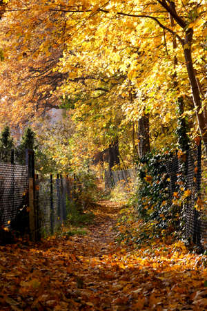 Small footpath leading through a residential neighborhood in Berlin, Germany, is covered in bright yellow fallen leaves in Autumn. photo