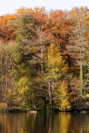 Colorful fall foliage on the trees at the shore of lake Schlachtensee in Berlin, Germany. photo