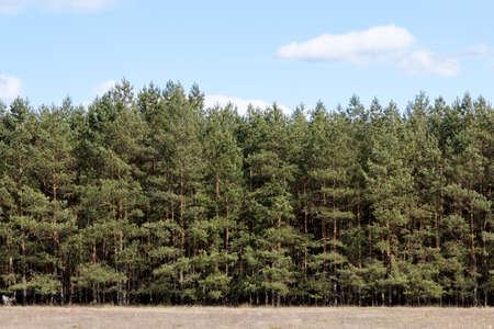 treeline: Tree Line behind a meadow at springtime