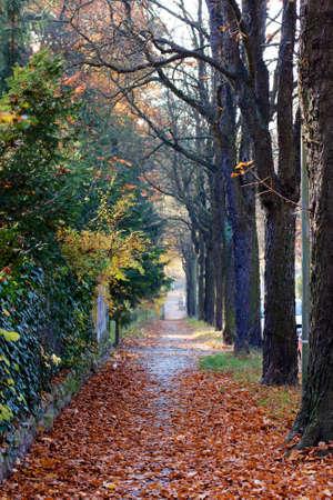 treelined: Fallen leaves cover a tree-lined sidewalk in Berlin, Germany, in Autumn  Stock Photo