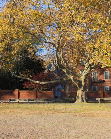 dormitories: Yellow fall foliage at Harvard University campus in Cambridge, MA, USA