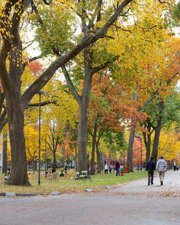 ivy league: CAMBRIDGE, MA, USA - NOVEMBER 3, 2013  Harvard Yard, old heart of Harvard University campus, on a beautiful Fall day in Cambridge, MA on November 3, 2013  Editorial