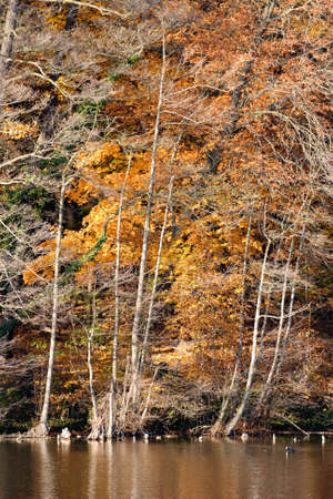 Colorful fall foliage on the shore of lake Schlachtensee in Berlin, Germany in Fall 2011  photo