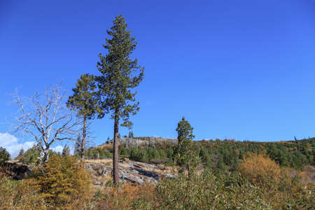 high sierra: Sparse trees on a high plateau on the California side of the Sierra Nevada.