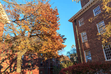 dorm: Colorful fall foliage and historic dorm buildings on the campus of Harvard University in Cambridge, MA, USA. Editorial