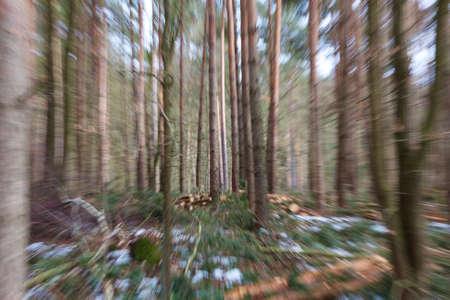 vertigo: Vertigo zoom blurred winter woods. Stock Photo
