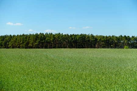 grass sky: View across a field in summer.